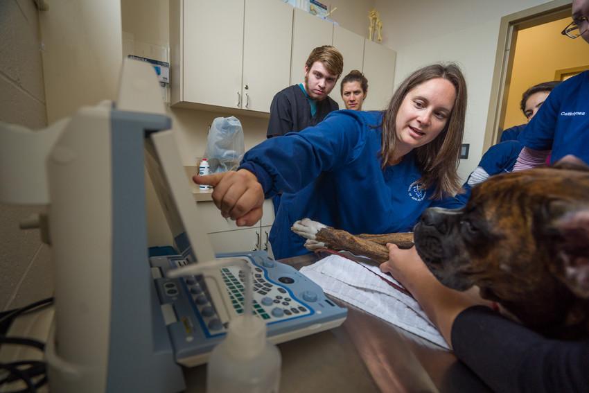 pre-veterinary students examining a dog